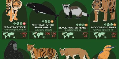 32 Endangered Species Ranked by Population