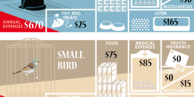 The Costs of Pet Adoption Infographic