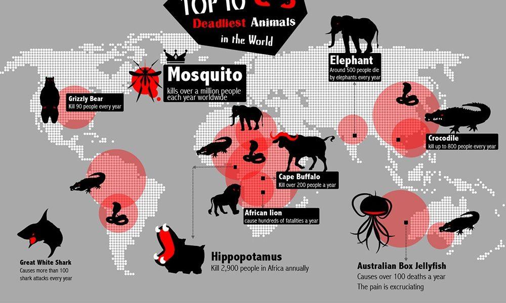 Deadliest Animals In the World {Infographic} - Best ...