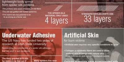 Why Spider Silk Is the Super Material of the Future {Infographic}