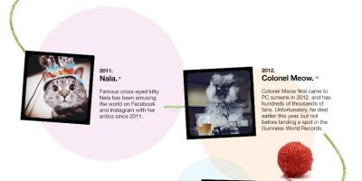 Famous Cats on the Internet {Infographic}