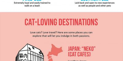 The World According to Cats {Infographic}