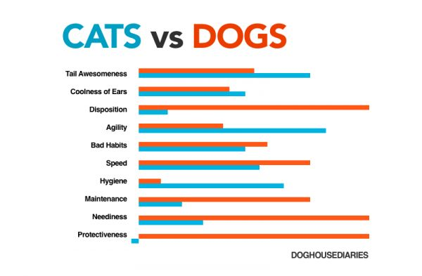 dogs cats