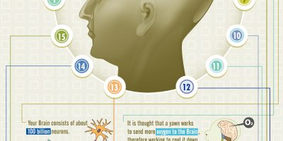 Brainology: Amazing Brain Facts {Infographic}