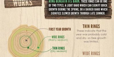Wood Types & Their Differences {Infographic}