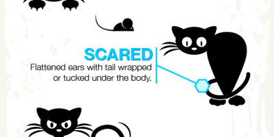 Cat Body Language Explained {Infographic}