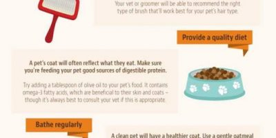 How to Control Pet Hair {Infographic}