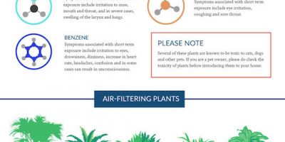 Air Purifying Plants {Infographic}