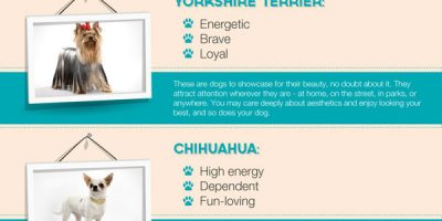 What Does Your Pet Say About You? {Infographic}
