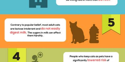 10 Fun Cat Facts You Must Know {Infographic}