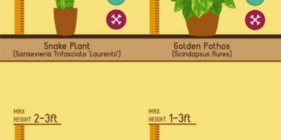 10 Great Indoor Plants {Infographic}