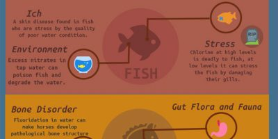 Hidden Dangers of Tap Water for Animals {Infographic}
