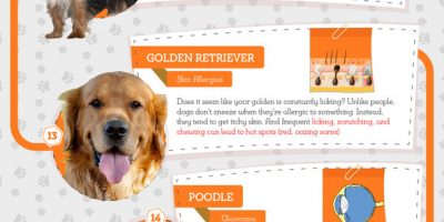 25 Most Popular Dog Breeds & Their Health Problems {Infographic}
