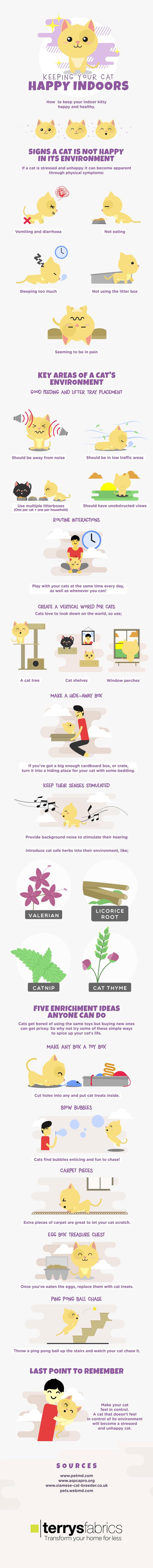 indoor-cats-happy