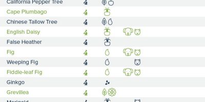 199 Poisonous Plants {Infographic}
