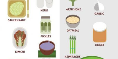 Importance of Probiotics & Prebiotics Infographic