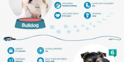 10 Most Popular Dogs {Infographic}