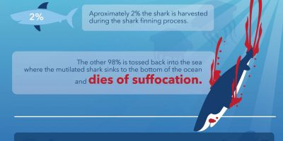 Facts Behind Shark Finning [Infographic]