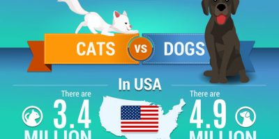 Why Pet Shelters Need Your Support [Infographic]