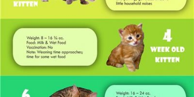 Cat Growth Chart [Infographic]