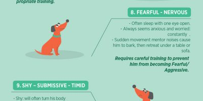 How to Understand Your Dog [Infographic]