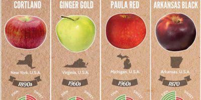 37 Apple Varieties of the World [Infographic]