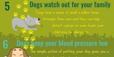 How Dogs Make You & Your Family Healthier [Infographic]