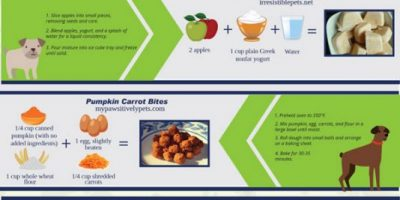 DIY Dog Treat Recipes [Infographic]