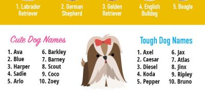Top Dog Names of This Year [Infographic]