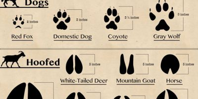 50 Animal Footprints Found In North America