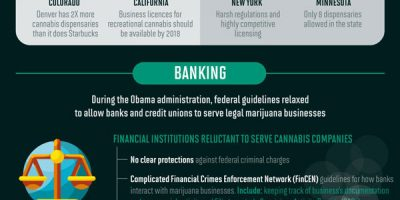 The Business of Cannabis [Infographic]