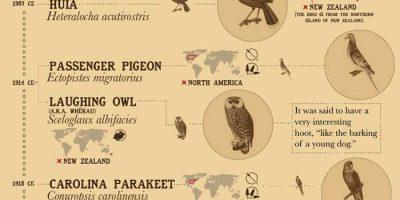 36 Extinct Animals Due to Human Activity