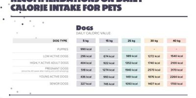 Feeding Recommendations for Pets