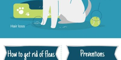 How to Naturally Get Rid of Dog Fleas