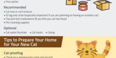 The Complete Checklist for First Time Cat Owners
