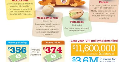 Why Dogs Shouldn't Eat Nuts [Infographic]