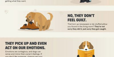 The Psychology of Dogs [Infographic]