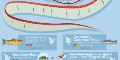Fish Species of North America [Infographic]