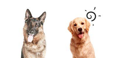 What Pet Door Size Should You Buy? [Infographic]