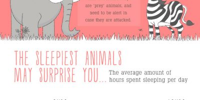 Sleeping Habits of Animals [Infographic]
