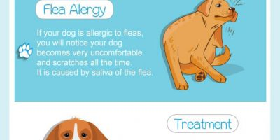 Allergies in Dogs & Their Treatments