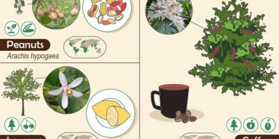 27 Foods & The Plants They Come From
