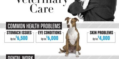 The Business of Dogs [Infographic]