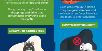How to Get Rid of Mice [Infographic]