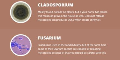 12 Mold Types In Your Home