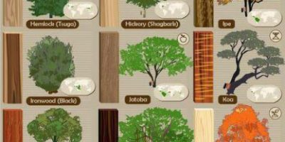 52 Types of Wood [Infographic]