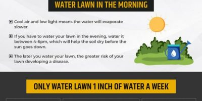Summer Lawn Care Maintenance Tips