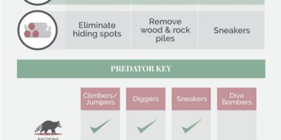 How to Predator-Proof Your Coop [Infographic]