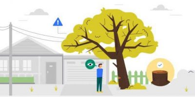 7 Reasons You Should Remove a Tree