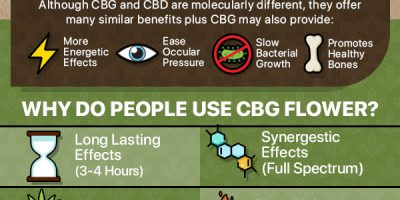 What Is CBG Hemp Flower? [Infographic]